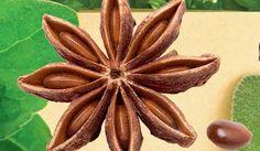 NEUVERÍTE, AKÉ LIEČIVÉ ÚČINKY MÁ TÝCHTO 12 VOŇAVÝCH KORENÍN Natural Treatments, Natural Medicine, Organic Beauty, Cactus Plants, Natural Health, Korn, Health Fitness, Detox, Spice