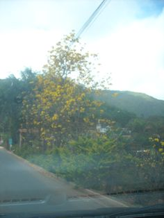 I love this road that takes me to my mother´s home... So beautiful... These are called Ipês.