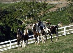 The Brigadier Rafael Tobias de Aguiar,and his troops of horses, who cross São…