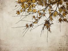 Autumn leaves with texture.