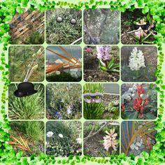Le carnaval des plantes