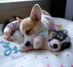 """""""Isn't this the perfect way to spend the afternoon?"""" writes @lychee_the_corgi #dogsofinstagram"""