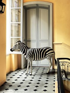 Deyrolle Zebra Composition The post Deyrolle Zebra Composition appeared first on Fotografie.