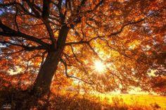 """= VERDADES """"Não há um só dia que Deus não derrame sobre nós incontáveis bênçãos. Infinitas delas!  Eu sei que as adversidades parecem cobrir o céu como uma nuvem negra, mas o sol permanece ali e seus raios, mesmo que não os vejamos, continuam a nos aquecer e nos manter vivos.  Quando as dificuldades baterem à porta, não tema!  O problema é que pensamos que estamos sós, que Deus está longe ou vai demorar.  Mas Ele está do nosso lado e nos ajudará a abrir e enfrentar. Porque fé é isso, sabe?"""