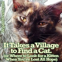 Last week, we lost our five-month-old kitten. Finding her again required the help of a lot of social media friends. Sometimes, the best way to unite a community involves a cute furry creature.  http://veganstreet.com/ittakesavillagetosaveacat.html