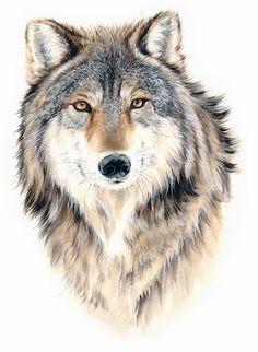 wolf 狼 painted by Janexu 许宁水彩作品 Wolf Artwork, Bird Artwork, Wolf Sketch, Scratchboard Art, Wolf Painting, Drawn Art, Wolf Tattoo Design, Wolf Pictures, Wolf Spirit