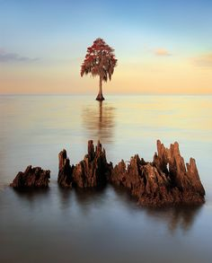 Inevitable - The decaying stump fortells the fate of the distant cypress, Louisiana