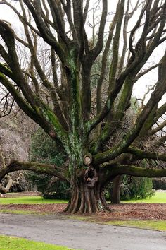Hagley Park, Christchurch. It's funny how I live really close to this now:)