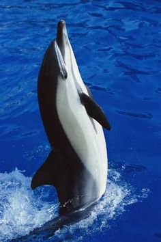 Graceful dolphin