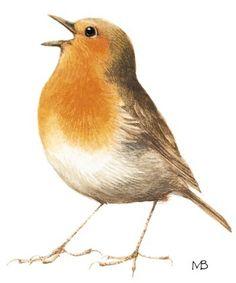 New robin bird painting marjolein bastin Ideas Bird Illustration, Illustrations, Marjolein Bastin, Nature Sketch, Motifs Animal, Robin Bird, Nature Artists, Bird Artwork, Bird Crafts
