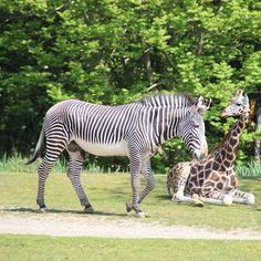 #zooschaufenster #leipzig #thisisleipzig #rosental #rosentalpark #zoo #tiere #frühling #spring #momentaufnahme #love