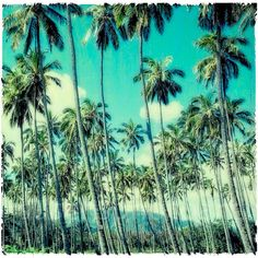 Palm Trees Kauai Hawaii 8x8 fine art photo on watercolor paper for... ($28) ❤ liked on Polyvore featuring home, home decor, wall art, backgrounds, pictures, icons, pics, photography, watercolor wall art and white home decor
