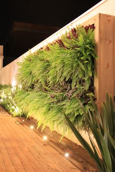 Beautiful Idea for the Backyard #REalPalmTrees or RealPalmTrees.com Painel, parede verde.
