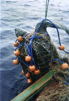 New report finds millions of marine turtles killed by fisheries, not thousands.