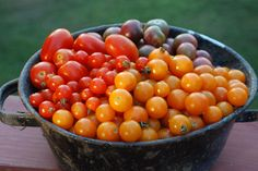 Tri-colored cherry tomatoes in bowl