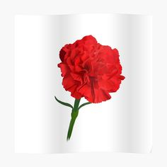 Framed Prints, Canvas Prints, Art Prints, Red Carnation, My Canvas, Carnations, Glossier Stickers, My Arts, Printed