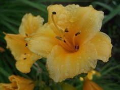 Plants, Flowers, Flora, Plant, Planting
