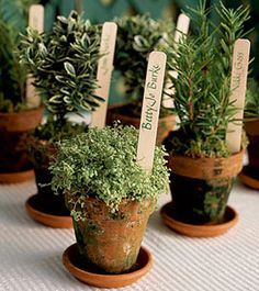 Potted plant instead of cut flowers for centerpieces, and send them home with relatives or as gifts for the bridal party
