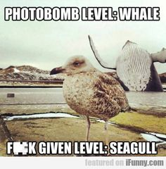 My question is why would you be taking a picture of a seagull when there are whales nearby?