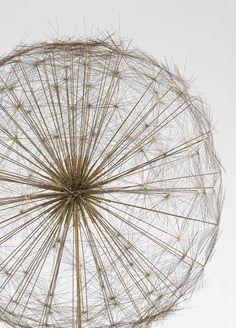 preciousandfregilethings:  moodboardmix:  Harry Bertoia. Dandelion…  .
