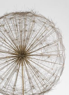preciousandfregilethings:  moodboardmix:  Harry Bertoia. Dandelion…  .