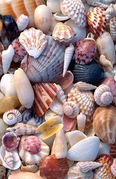 Sanibel seashells -- Henry Domke Photography... Nice mix