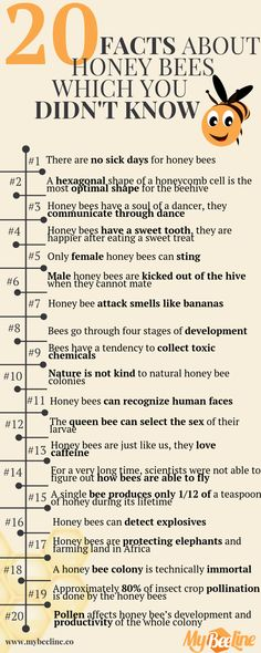 Join us on a journey through 20 honey bee facts and you might learn some amazing things about our friends honey bees. Honey Bee Facts, Facts About Honey Bees, Types Of Honey Bees, Different Types Of Bees, How Bees Make Honey, Bee Quotes, Bee Wings, Buzzy Bee, Gardening