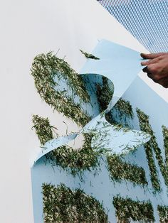 "Graffiti made with grass for the urban art festival: NON TOXIC.The phrase ""Semilla pero no se toca"" talks about the idea of preserving what we have and is not ours: the nature, the plants, the planet. Statement about the preservation of the nature."