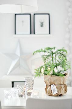 Minimalist Christmas l small pine tree in paper bag pot l white Christmas