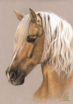 Berber Stallion, pastel