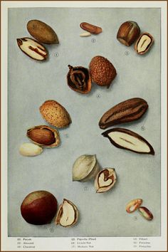 "https://flic.kr/p/wKdfQq | Edible Nuts 2 - ""The Grocer's Encyclopedia"" or ""Encyclopedia of Food and Beverage"" (1911) by Artemis Ward 