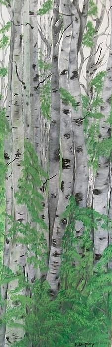 Canadian White Poplar - painting by Sharon Duguay  #canadian #white #poplar