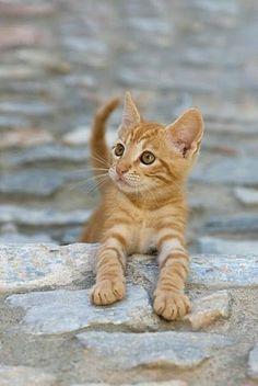 Sweet baby! #CatAndKittens