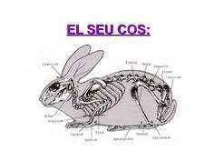 projecte conills - Cerca amb Google