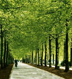 Münster, Germany.... biked the promenade many, many times!!