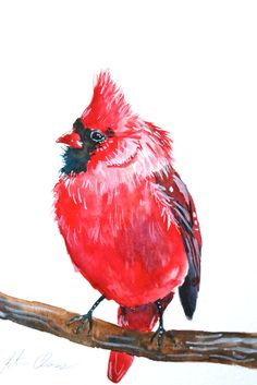 "Watercolor Painting, Cardinal, Bird Painting, Red, Original, 6""x9"" via Etsy"