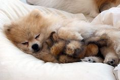 I'm the big spoon, Bunny is the little spoon.