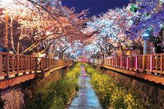 Flores de luz - Fotografías nocturnas de cerezos en flor