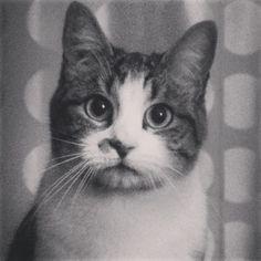 Pantoufle et sa sacrée frimousse #chat  --- verlina.com ---