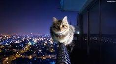 Znalezione obrazy dla zapytania tapety kot halloween