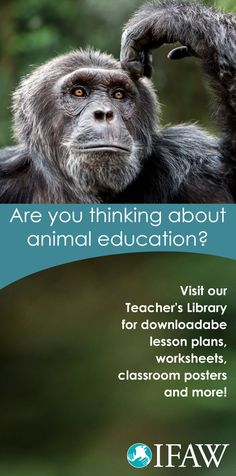 Attention teachers! The International Fund for Animal Welfare's extensive library offers you and your students the opportunity to learn about wild animals, their habitats, and their future! Download your lesson plans at no charge today! http://g.ifaw.org/1TGkSIX