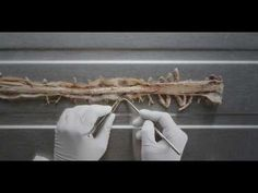 ▶ An Introduction to the Spinal Cord - UBC Flexible Learning - YouTube