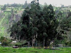 PROBLEMAS AMBIENTALES EN EL MUNICIPIO DE IPIALES, Nariño, Colombia.