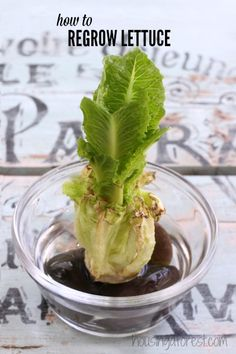 How to Regrow Lettuce ~ growing food from scraps.  Wow, I have to try this.