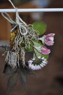 Suszone rośliny
