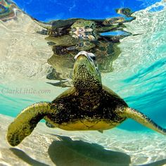 Honu: The Hawaiian Sea Turtle inspires me to slow down, reflect, and go with the flow. What animal inspires you?