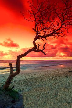 "Orange sunrise ""Morning Solitude"" by Warren Ishii"