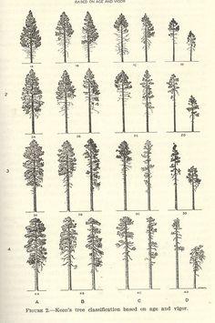 keen's tree clasification
