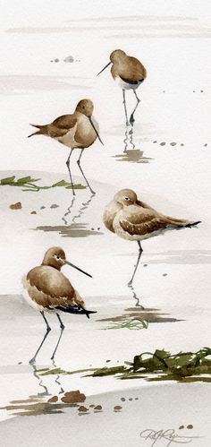 SAND PIPERS Set Of Two Art Prints Signed by by k9artgallery