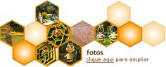 Vidas das abelhas – Polinização – Mel | Parque Cidade das Abelhas